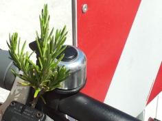 rosmarino e bicicletta